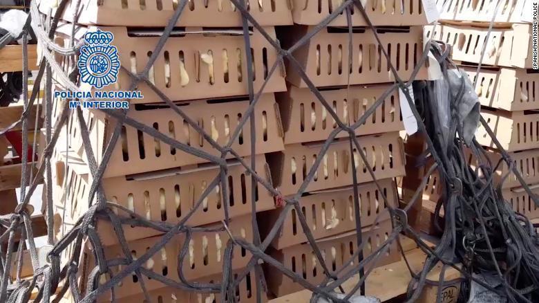 西班牙國家警察在機場查獲二萬多隻被遺棄的小雞。(翻攝自網路/西班牙警方提供)