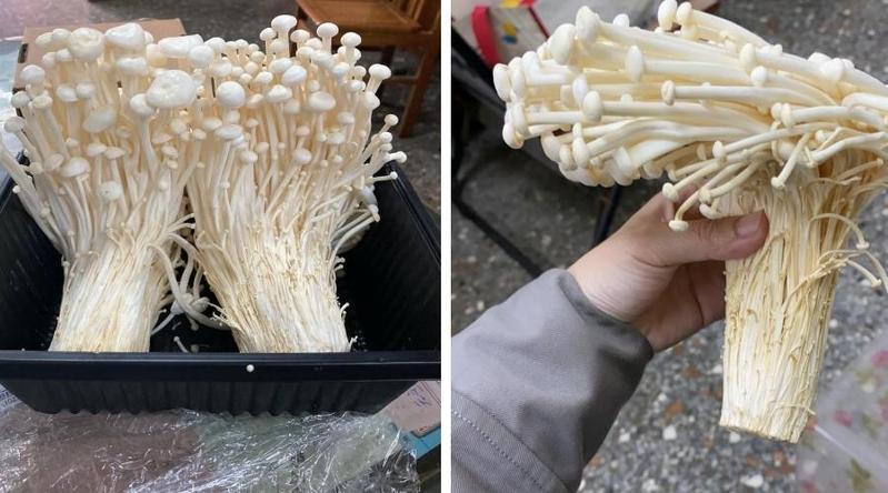 網友在臉書社團「Costco好市多商品經驗老實說」發文,貼出奇特的金針菇照。(翻攝自臉書)
