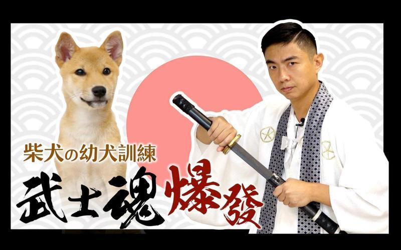 源於日本的柴犬血液裡擁有武士魂,對於想養柴犬的新手主人,是一大挑戰。熊爸用影片教導如何訓練傲嬌柴柴。