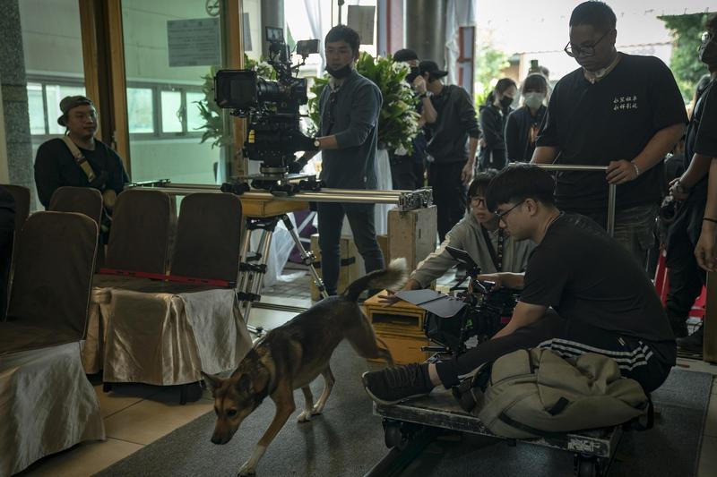 偶像劇《黑喵知情》動物戲占4成,毛小孩演技也引起觀眾討論。(酷斯本提供)