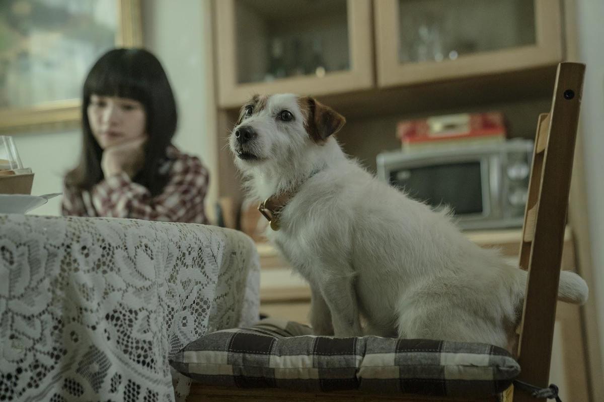 傑克羅素梗犬「吉米」是業界知名的動物明星,廣告片中經常出現牠身影。(酷斯本提供)