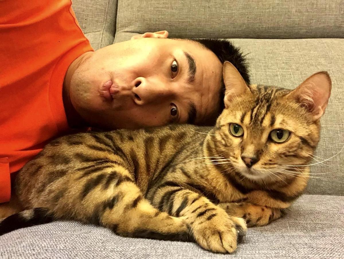 六月過去曾飼養3隻貓,目前其中1隻被「博焱」林曜晟收養。(翻攝自林曜晟臉書)