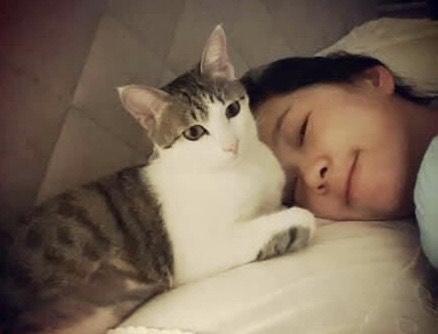 即將遭送往收容所的米克斯貓,過去曾是六月的最愛。(翻攝自六月臉書)