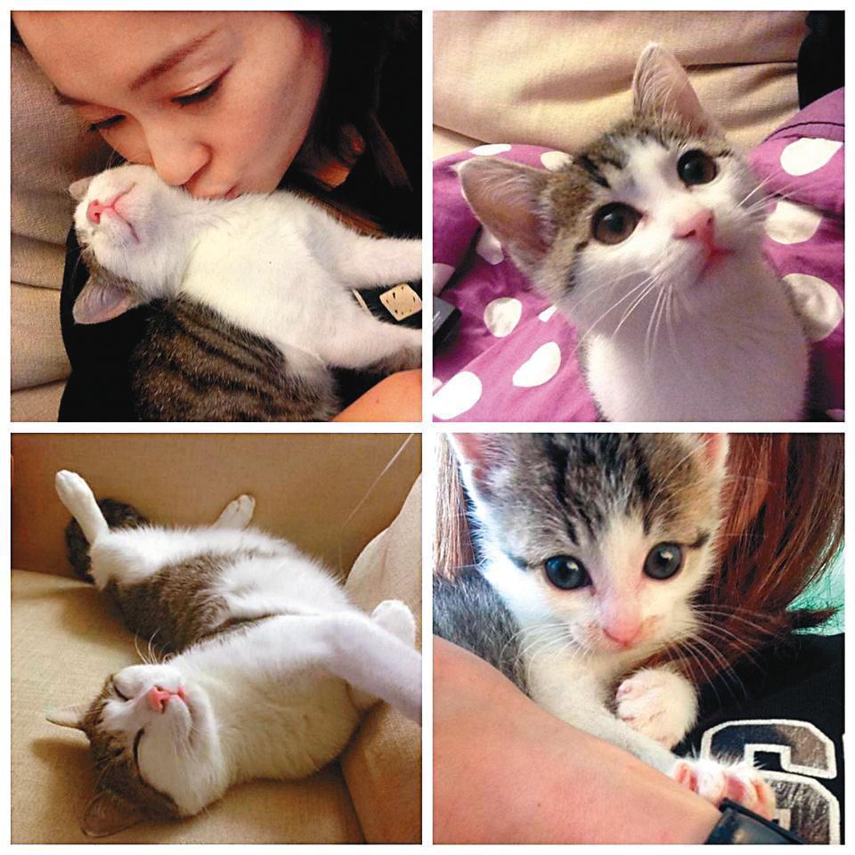 過去愛貓形象鮮明的六月,爆發「棄養」風波,聲明打算循司法程序解決後,幫助貓咪中途的志工也出面回覆握有棄養文件。(翻攝自六月臉書)