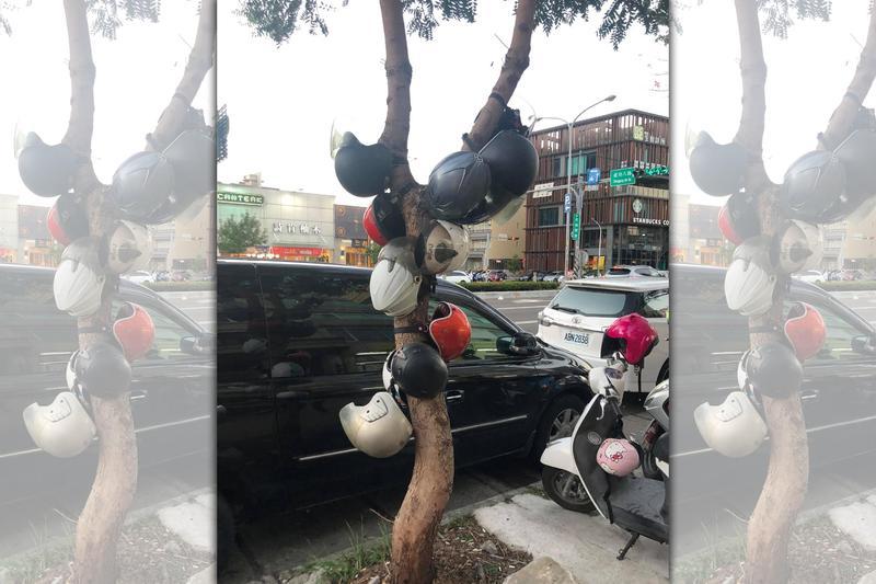 新竹路邊長出一棵「安全帽樹」,網友紛紛笑稱「裝置藝術」。(翻攝自臉書社團:新竹大小事)