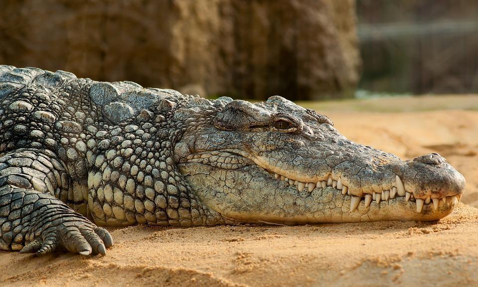 柏金包賣翻!愛馬仕謀砸2億 建「最大養殖場」養5萬鱷魚