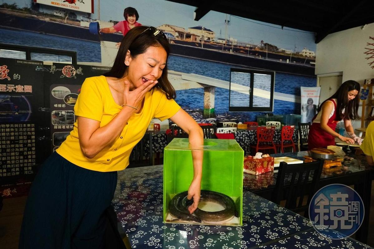 專門為團體客人準備好玩又有趣的鰻魚恐怖箱。