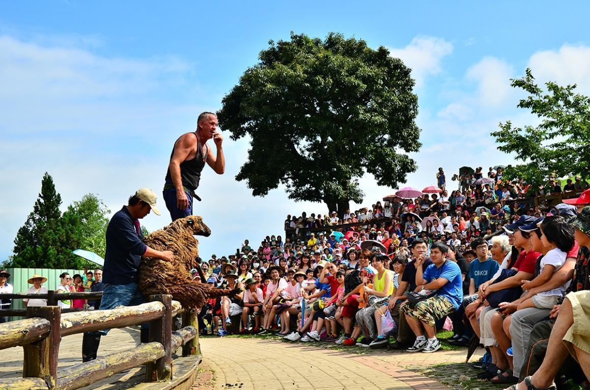 台灣動物平權促進會強調,動保團體反對的不是剃羊毛,而是綿羊秀。(翻攝自清境農場官網)