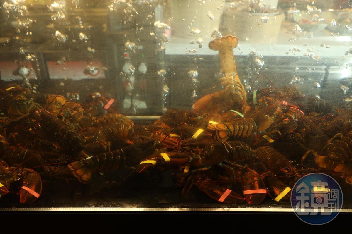 水族箱裡是一隻隻活潑的波士頓龍蝦。