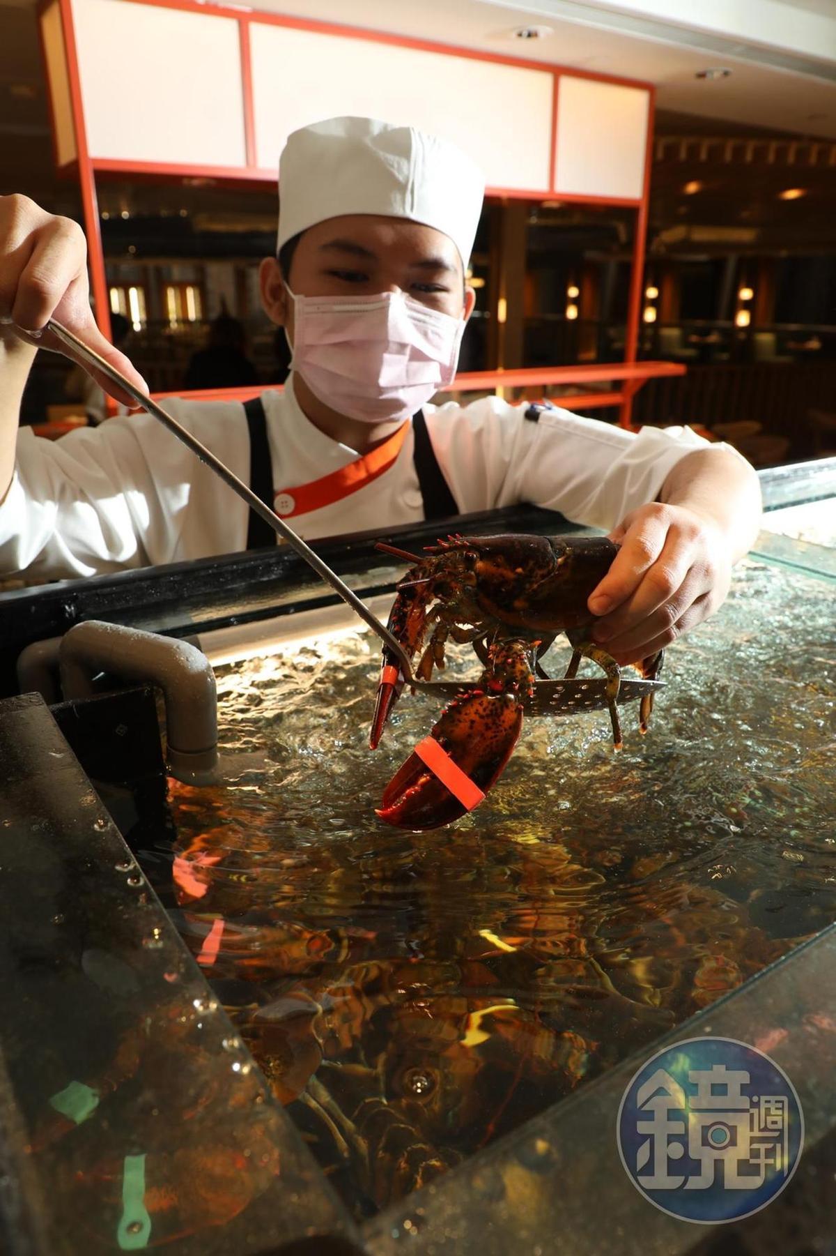 龍蝦達人隨時候教服務。