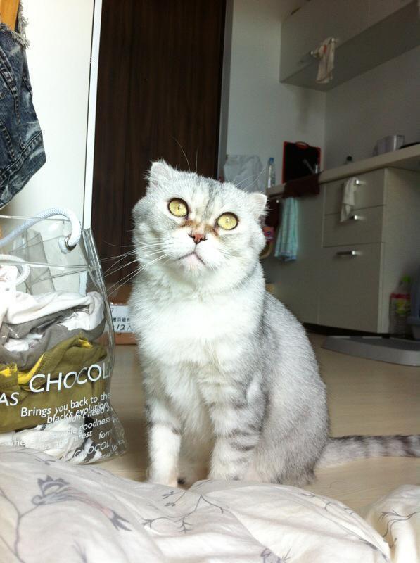 愛貓過世讓林芯儀心痛不已。(林芯儀提供)