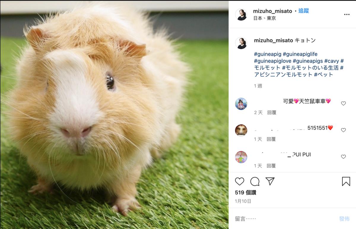 每集都會出現的主角「馬鈴薯」是導演姊姊的寵物鼠  (翻攝自 《天竺鼠車車》 官方推特/ IG見里瑞穂)