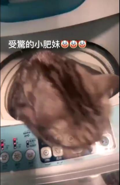 洗衣機關閉後,受驚嚇的貓立刻從機門跳出逃走。(翻攝自Yuki IG)