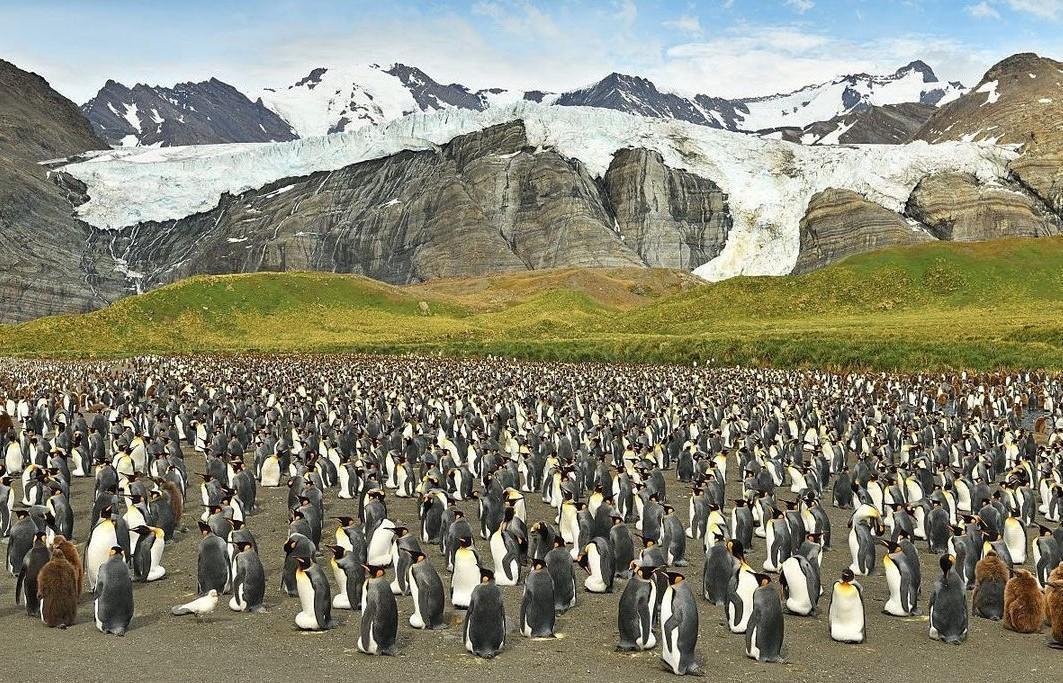 12萬隻企鵝的場面相當壯觀。(翻攝Yves Adams IG)