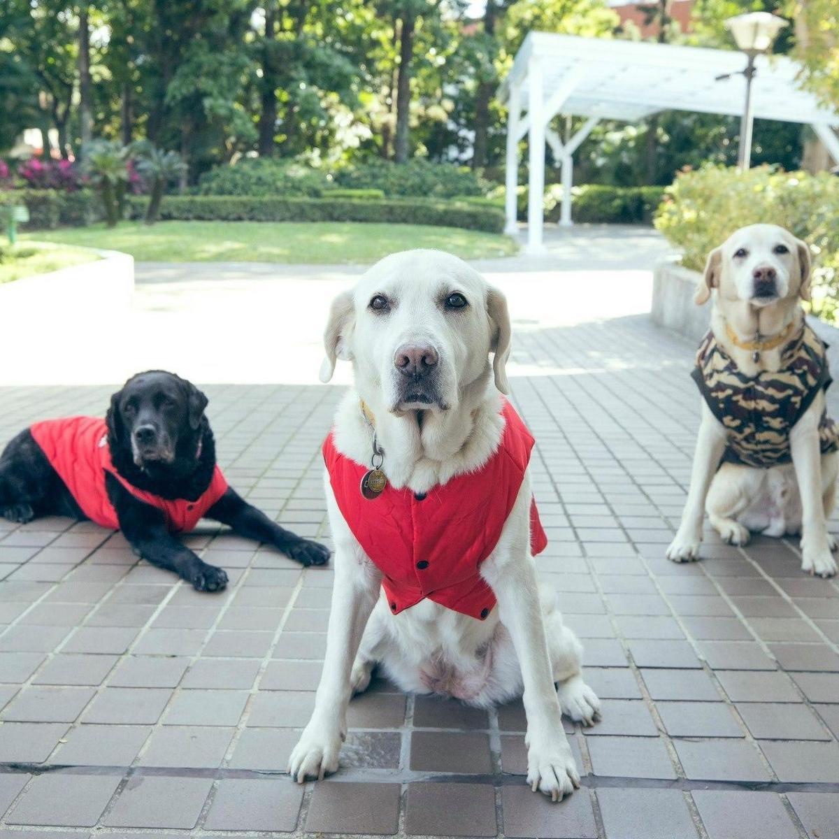 3隻導盲犬Maru、Bella和Bunny。(翻攝蔡英文臉書)