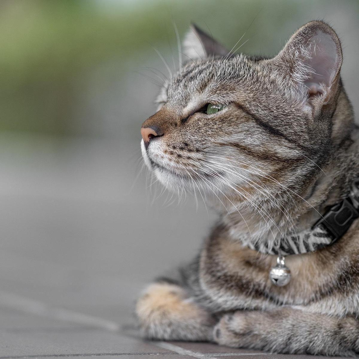 蔡想想是蔡英文收養的流浪貓。(翻攝蔡英文臉書)